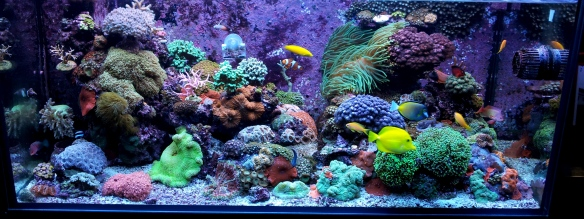 Reef Wide 2012 Feature Image