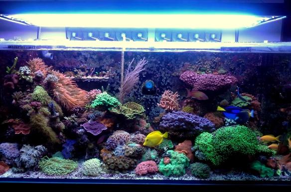 banner_ReefCentral